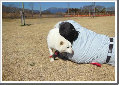 動物共生支援活動イメージ